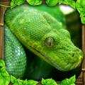 蟒蛇模拟器中文破解版 v1.1