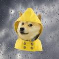 单身狗天气app官方下载手机版 v1.01