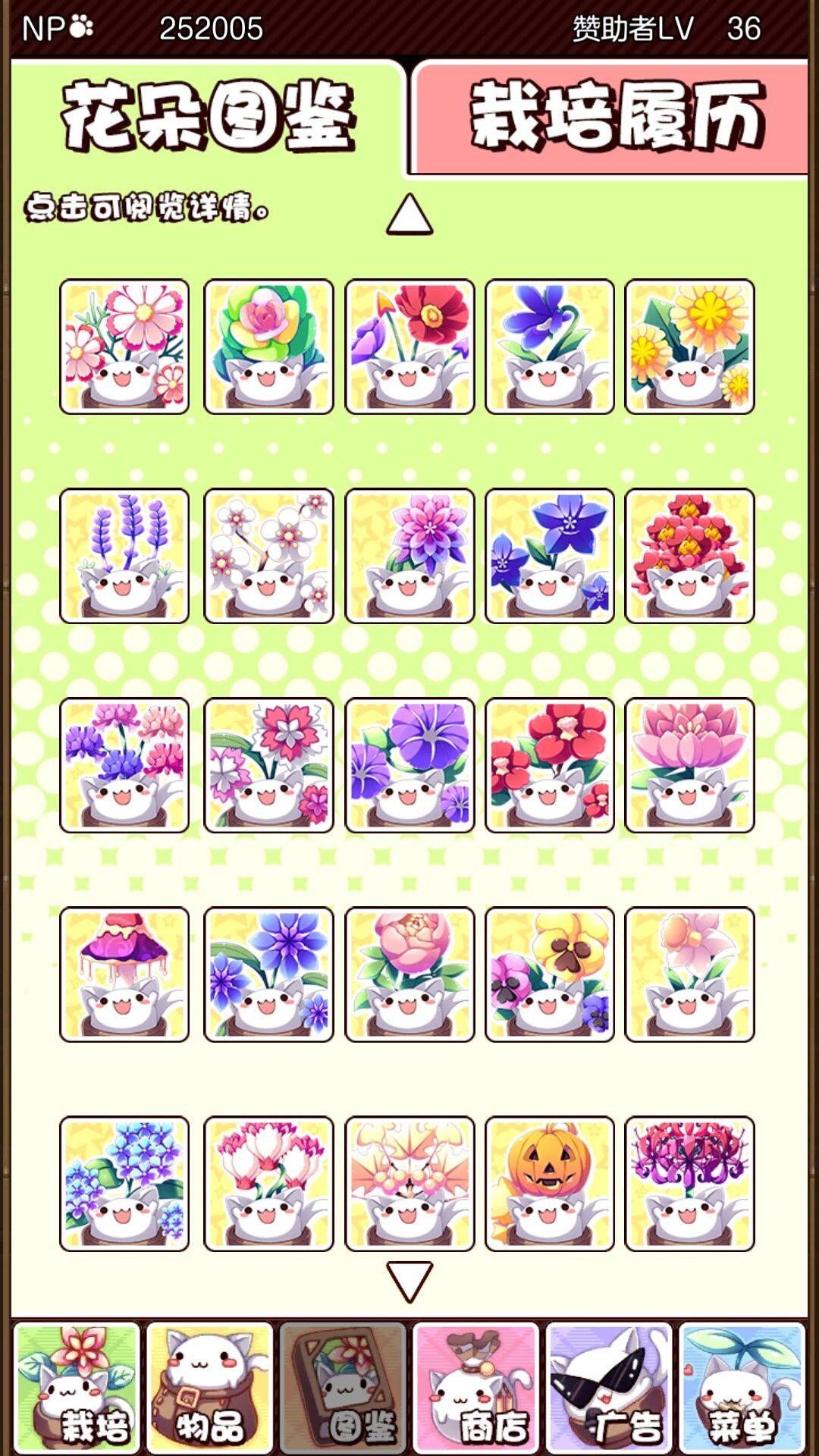 猫咪花盆花朵配方大全 花朵组合汇总[图]