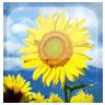 向日葵动态桌布官网版app下载 v1.1.4
