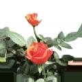 神秘的植物园手机版客户端ap下载 1.0