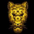 猎豹小贷官方版app下载安装 v1.0